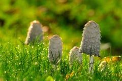 Seta entre la hierba Imagen de archivo libre de regalías