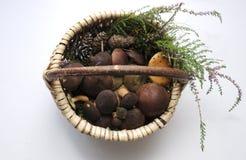 Seta fresca del porcini en una cesta imagen de archivo