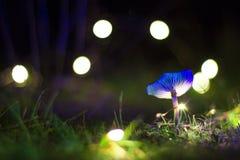 Seta magica en la noche. Blue magic mushroom with lights background in a night royalty free stock image
