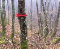 Seta na árvore Imagens de Stock