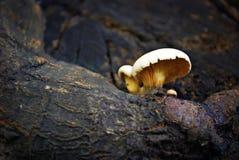 Seta que crece en una rama de árbol Foto de archivo