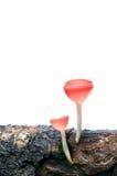 Seta rosada de la taza de la quemadura aislada en el backgroun blanco Imagen de archivo