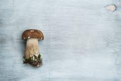 Seta salvaje en un fondo de madera, boleto Fotografía de archivo