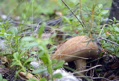 Seta sola del bosque Imagenes de archivo
