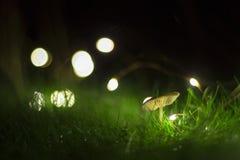 Seta solitaria con luces Stock Photography