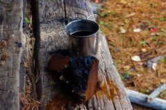 Seta y té de Chaga en el desierto de Adirondack imágenes de archivo libres de regalías