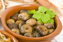 Setas al Ajillo. Sauteed mushrooms with garlic, lime and parsley. Traditional Spanish tapas dish Royalty Free Stock Photography