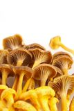 Setas amarillas del pie Fotografía de archivo libre de regalías