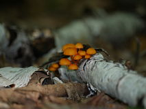 Setas anaranjadas Imagen de archivo libre de regalías