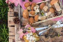 Setas blancas crudas, conos del pino con las decoraciones secas y cubiertos Imágenes de archivo libres de regalías