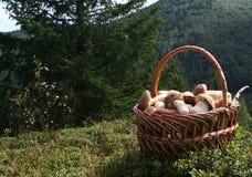 Setas blancas en la cesta Fotos de archivo libres de regalías