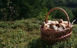 Setas blancas en la cesta Foto de archivo