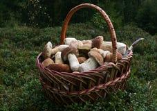 Setas blancas en la cesta Imagen de archivo libre de regalías