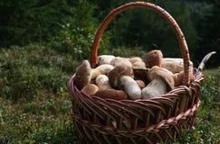 Setas blancas en la cesta Foto de archivo libre de regalías