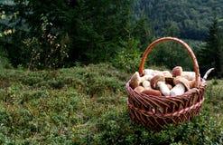 Setas blancas en la cesta Fotografía de archivo