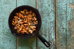 Setas comestibles salvajes Setas del mízcalo fritas en el arrabio  Fotos de archivo libres de regalías