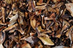 Setas comestibles secadas Imagen de archivo libre de regalías