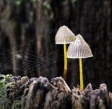 Setas con el web de araña Imagen de archivo