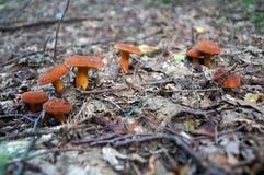 Setas con los sombreros y las piernas anaranjados Imagenes de archivo
