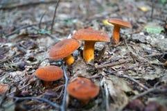 Setas con los sombreros y las piernas anaranjados Imágenes de archivo libres de regalías