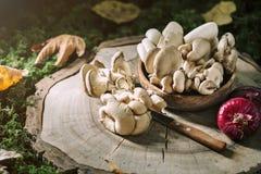 Setas crudas en tocón y las hojas de otoño Aún-vida del otoño Foco selectivo Fondo del otoño Imagen de archivo