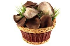 Setas de ostra en la cesta Foto de archivo libre de regalías