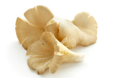 Setas de ostra frescas Imagen de archivo libre de regalías