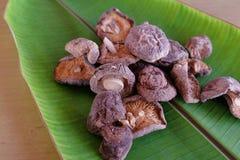 Setas de shiitake secadas Foto de archivo libre de regalías