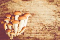 Setas del aegerita de Agrocybe Imagen de archivo libre de regalías