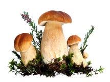 Setas del bosque Foto de archivo libre de regalías