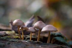 Setas del bosque Fotos de archivo libres de regalías