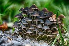 Setas del bosque Fotos de archivo