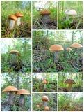 Setas del collage Foto de archivo