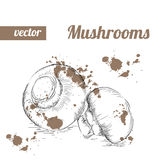 Setas dibujadas mano del estilo del bosquejo Ejemplo del vector de la comida del eco del vintage Setas maduras Imagen de archivo libre de regalías