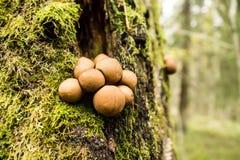 Setas en árbol Fotografía de archivo