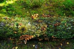 Setas en árbol caido en otoño imagenes de archivo