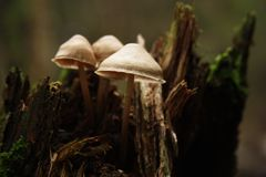 Setas en bosque del otoño fotografía de archivo