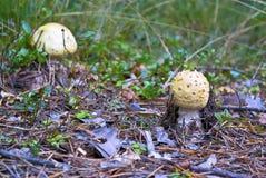 Setas en el bosque Imagen de archivo