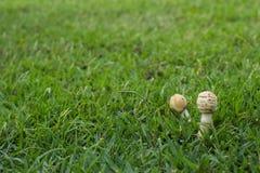 Setas en hierba verde Foto de archivo