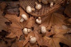 Setas en la cesta en el bosque Fotografía de archivo