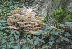 Setas en la madera Foto de archivo