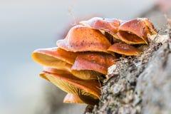 Setas en un árbol Foto de archivo