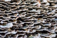 Setas en un bosque del otoño Imagenes de archivo