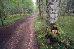 Setas en un tocón de árbol en una trayectoria de bosque Fotografía de archivo
