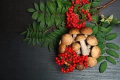 Setas Ingredientes del alimento biológico Fotos de archivo libres de regalías