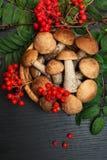 Setas Ingredientes del alimento biológico Imagen de archivo