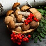 Setas Ingredientes del alimento biológico Fotografía de archivo