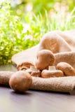 Setas marrones frescas del Agaricus Imagen de archivo libre de regalías