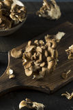 Setas orgánicas crudas de Maitake Fotografía de archivo libre de regalías
