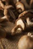 Setas orgánicas crudas de Shitaki Imagen de archivo libre de regalías